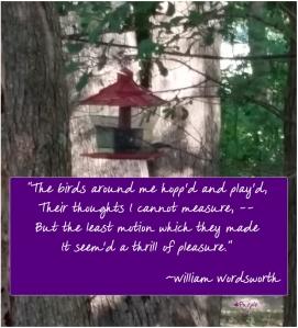 Birds around me-Wordsworth-hashtag purple